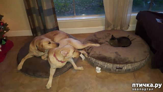фото 18: Наглые мордашки, которые присвоили место собак