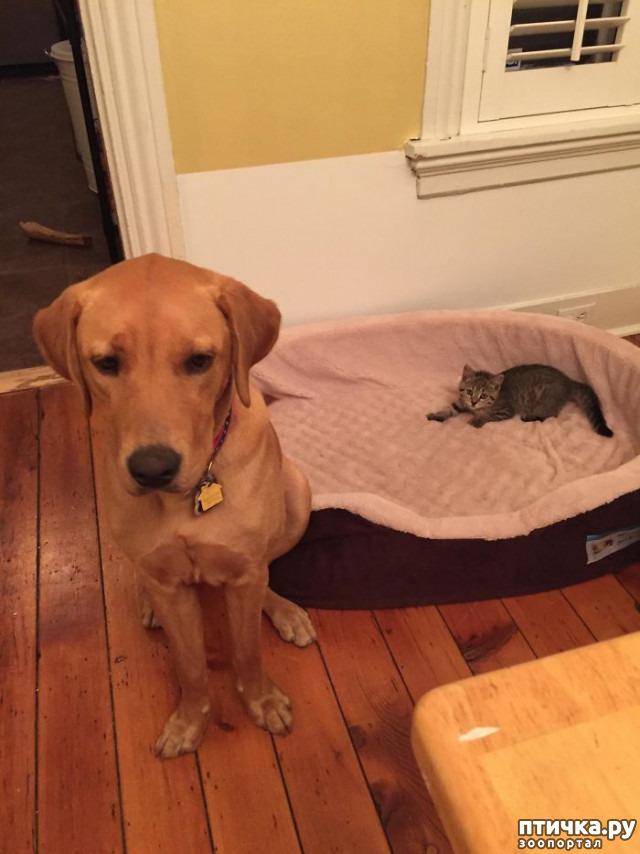 фото 19: Наглые мордашки, которые присвоили место собак