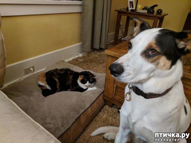 фото 21: Наглые мордашки, которые присвоили место собак