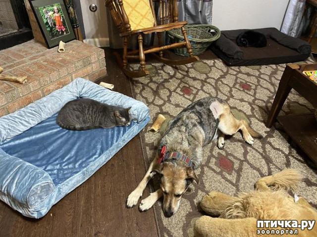 фото 22: Наглые мордашки, которые присвоили место собак