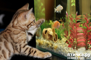 фото: Можно ли выдрессировать рыбку?
