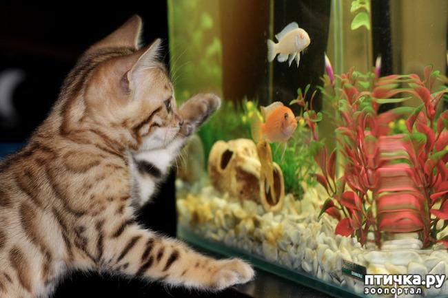 фото 1: Можно ли выдрессировать рыбку?