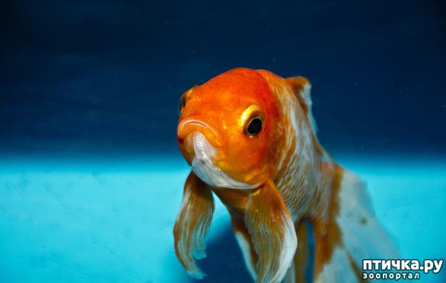 фото 3: Можно ли выдрессировать рыбку?
