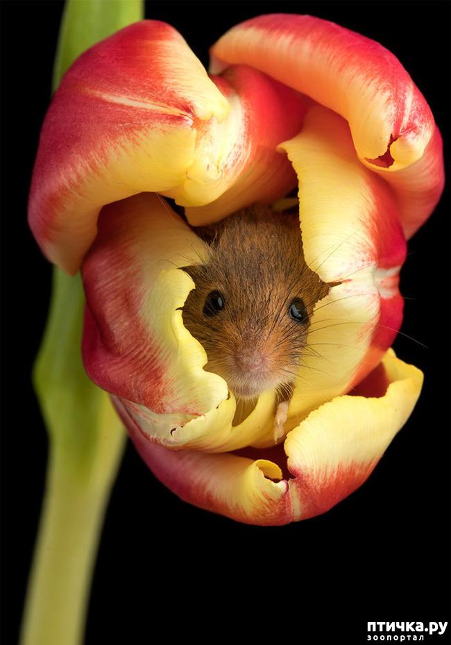 фото 3: Мышки - норушки