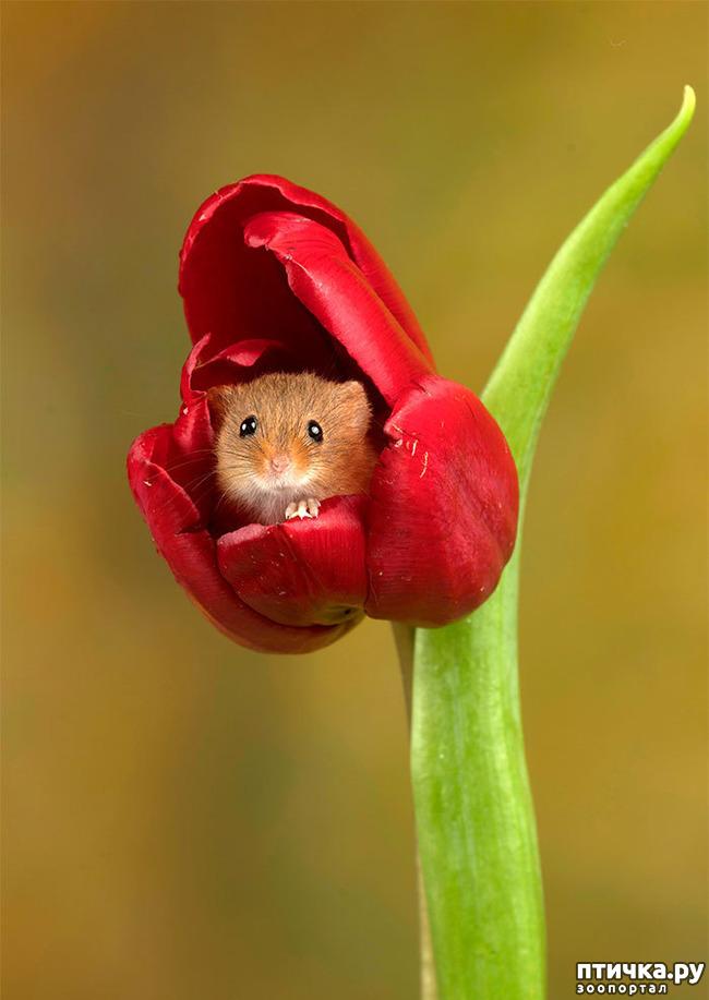 фото 4: Мышки - норушки