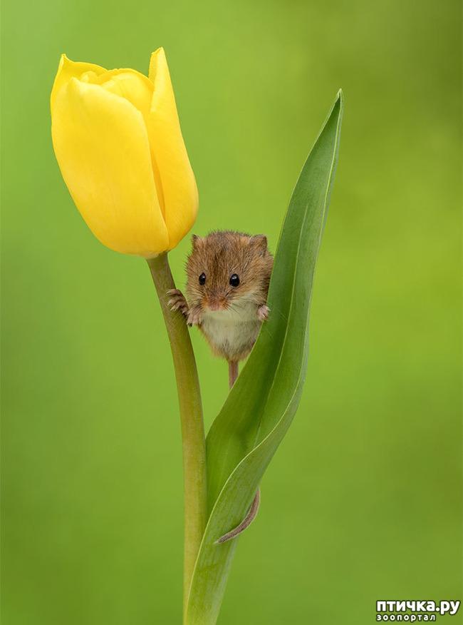 фото 7: Мышки - норушки