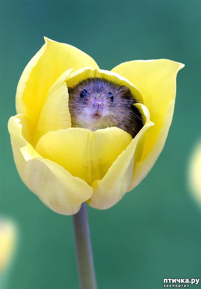 фото 9: Мышки - норушки