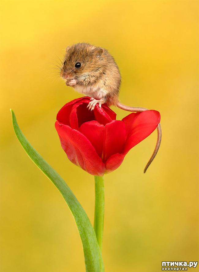 фото 10: Мышки - норушки