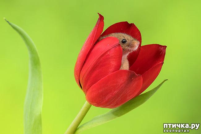 фото 11: Мышки - норушки