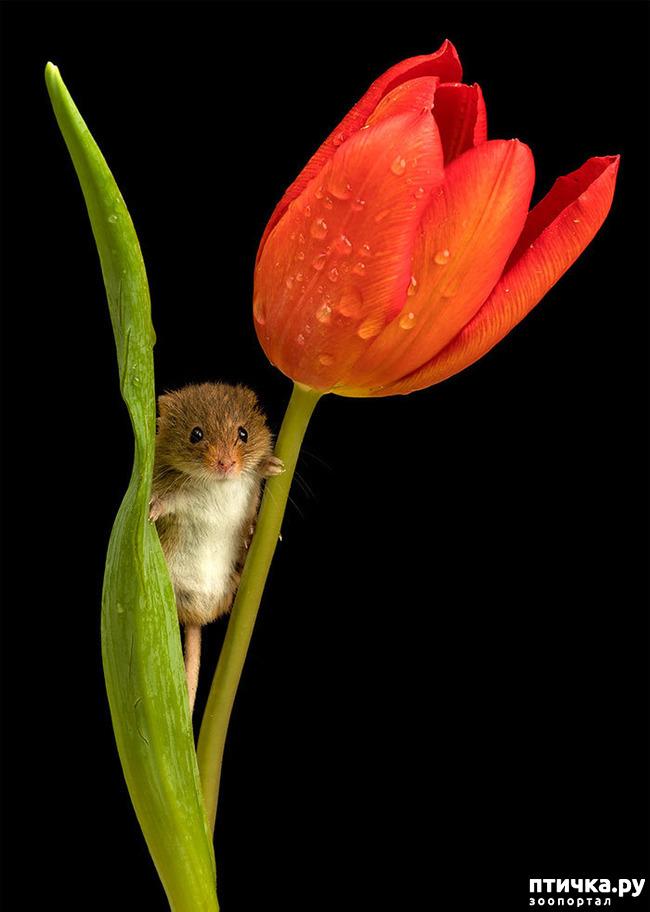 фото 15: Мышки - норушки