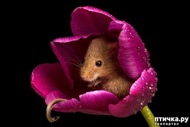 фото 17: Мышки - норушки