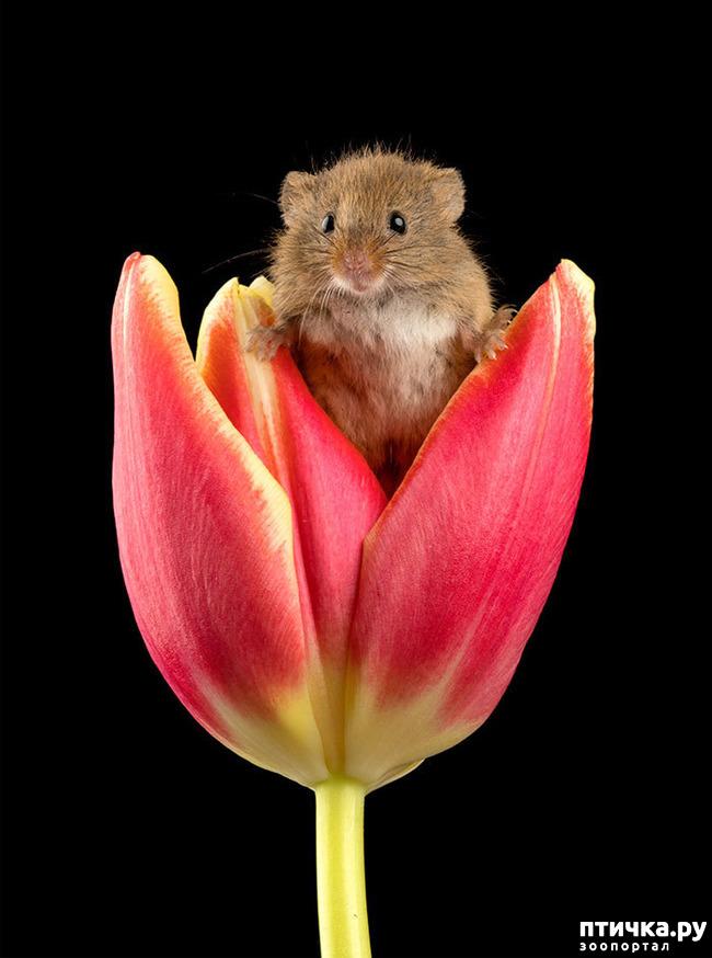 фото 18: Мышки - норушки