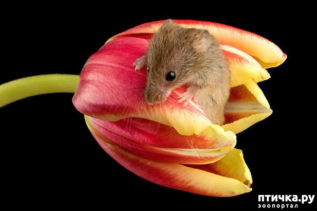 фото 20: Мышки - норушки