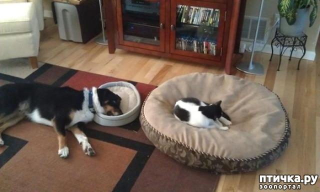 фото 25: Наглые мордашки, которые присвоили место собак