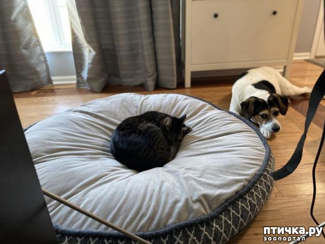 фото 1: Наглые мордашки, которые присвоили место собак