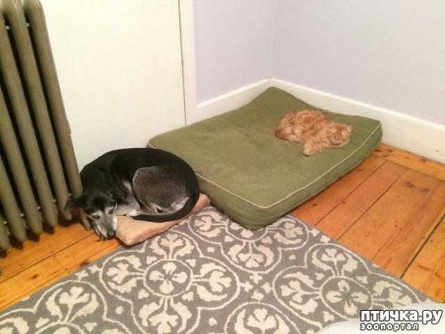 фото 2: Наглые мордашки, которые присвоили место собак