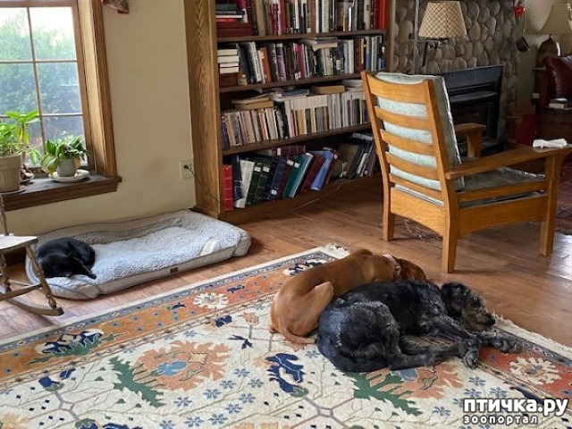 фото 4: Наглые мордашки, которые присвоили место собак