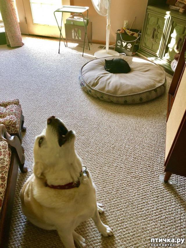 фото 9: Наглые мордашки, которые присвоили место собак