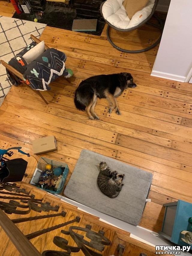 фото 10: Наглые мордашки, которые присвоили место собак