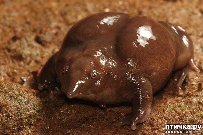 фото 6: Если не знали, знакомьтесь: очень редкие и удивительные экзотические животные.