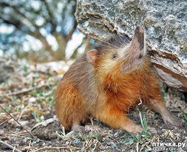 фото 7: Если не знали, знакомьтесь: очень редкие и удивительные экзотические животные.