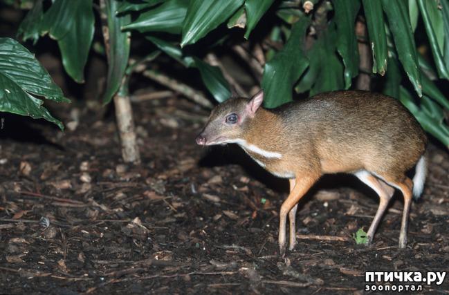 фото 8: Если не знали, знакомьтесь: очень редкие и удивительные экзотические животные.
