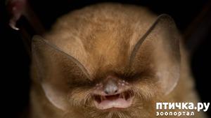 фото: Если не знали, знакомьтесь: очень редкие и удивительные экзотические животные.