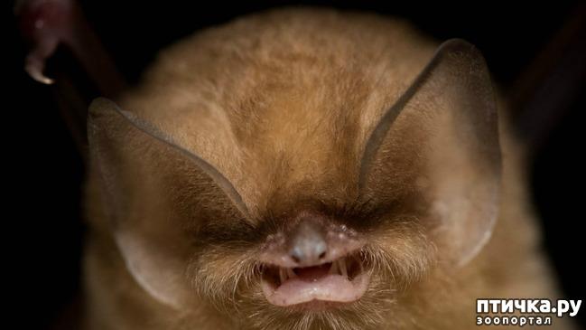 фото 1: Если не знали, знакомьтесь: очень редкие и удивительные экзотические животные.