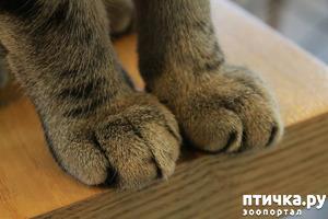 фото: Секреты кошачьих лапок