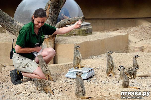 фото 3: Как взвесить жирафа?
