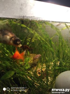 фото: Нужны ли живые растения в аквариуме?