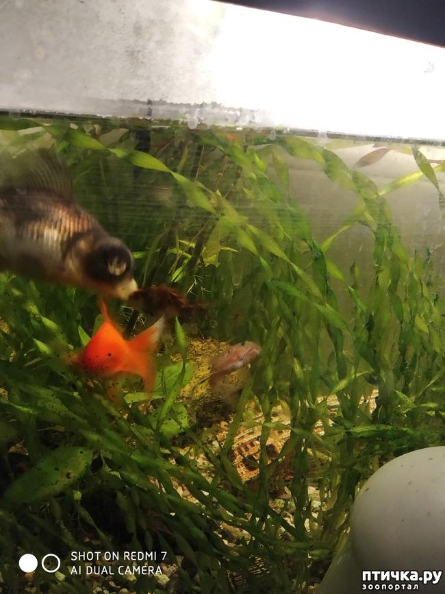 фото 1: Нужны ли живые растения в аквариуме?