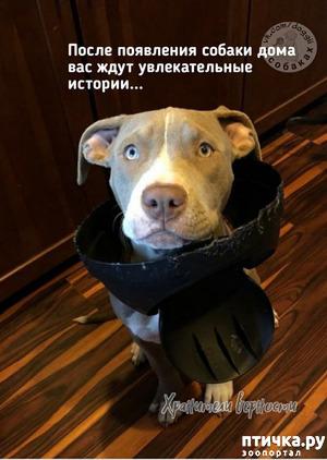фото: Для владельцев собак