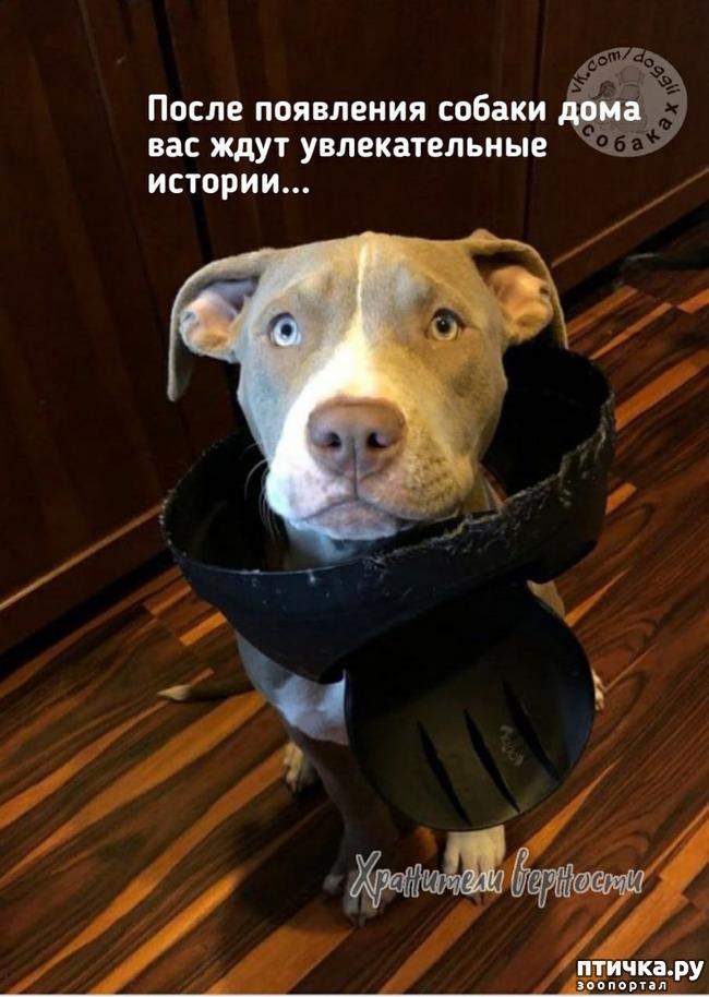 фото 1: Для владельцев собак