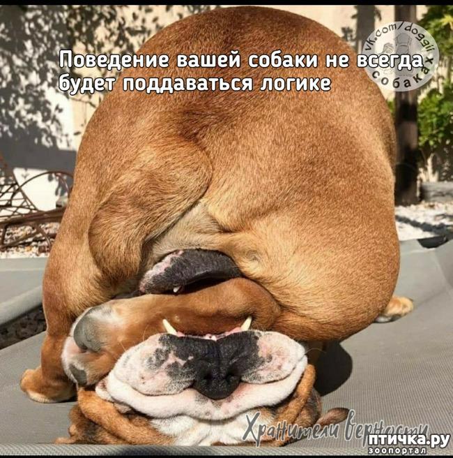 фото 2: Для владельцев собак