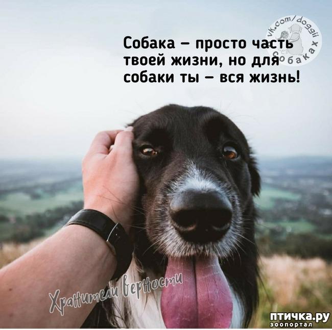 фото 3: Для владельцев собак