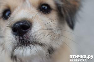 фото: Собачий запах.