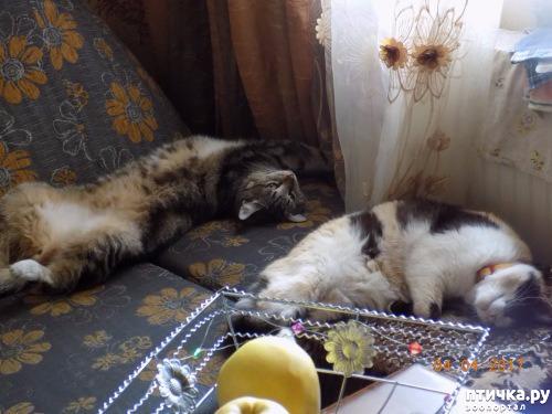 фото 4: Умеем ли мы говорить с кошкой?
