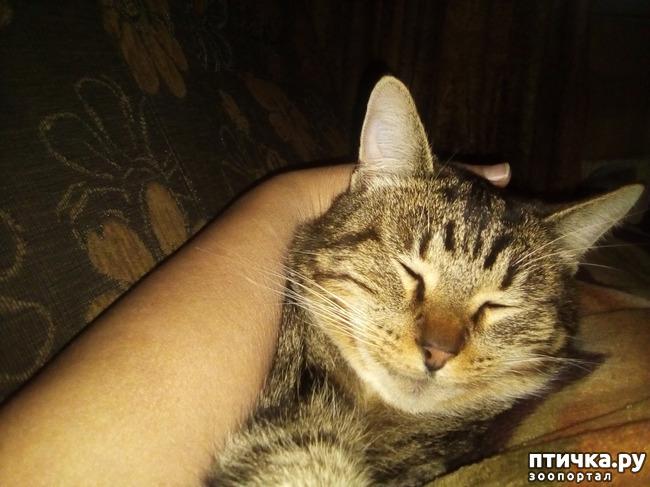 фото 8: Умеем ли мы говорить с кошкой?