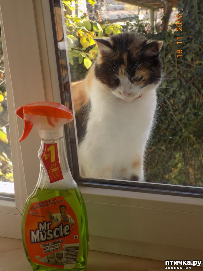 фото 10: Умеем ли мы говорить с кошкой?