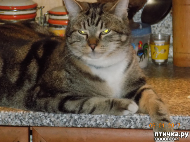 фото 11: Умеем ли мы говорить с кошкой?