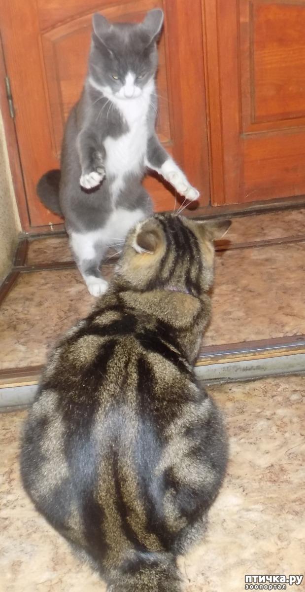 фото 14: Умеем ли мы говорить с кошкой?