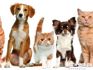 фото: Авитаминоз у животных.