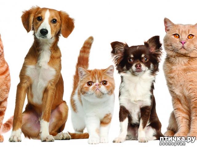 фото 1: Авитаминоз у животных.
