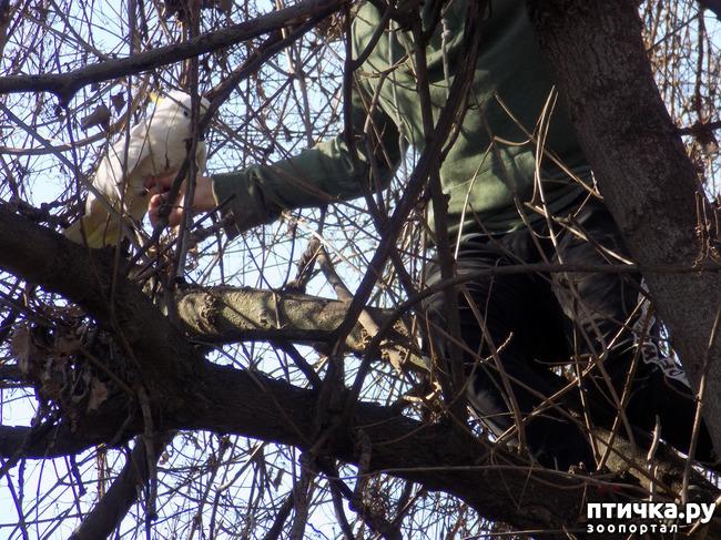 фото 2: Операция по спасению беглеца