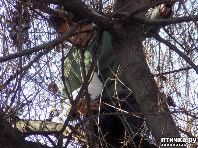 фото 3: Операция по спасению беглеца