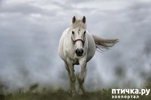фото: Лошадиный дух