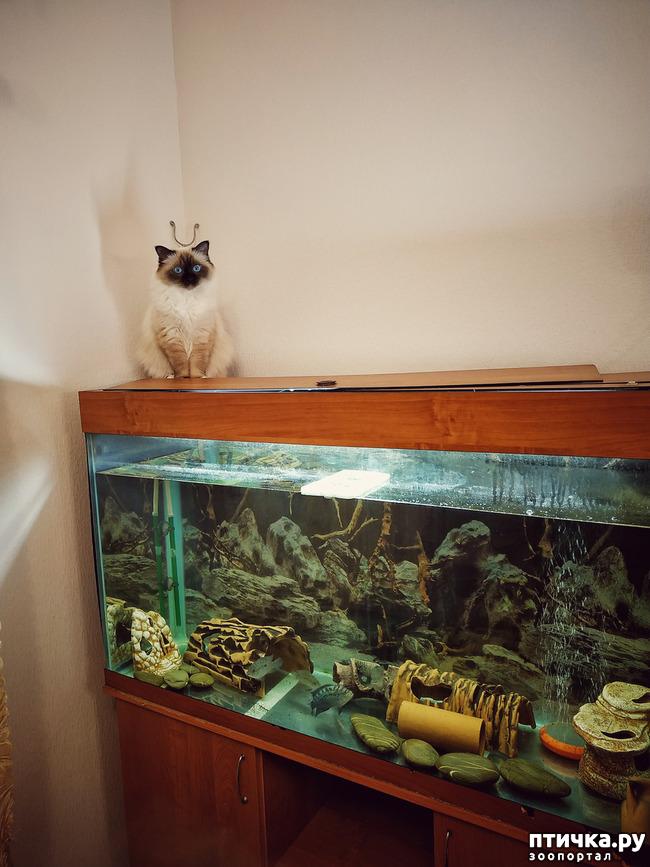 фото 5: Рыбнадзор 2