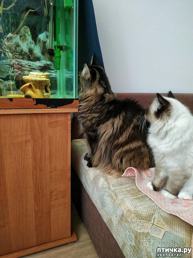 фото 4: Рыбнадзор 2