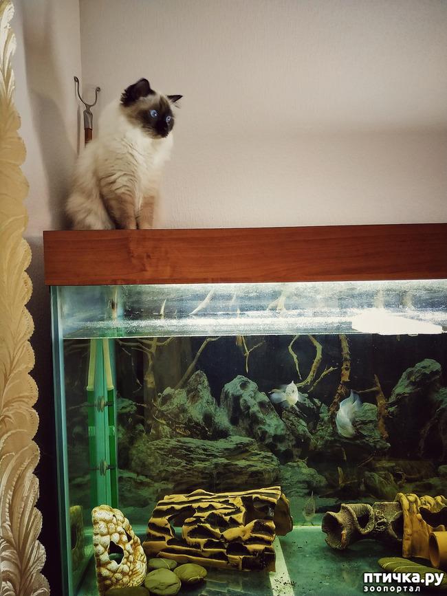 фото 6: Рыбнадзор 2